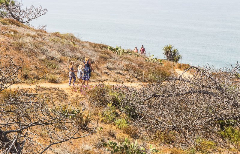 Torrey-Pines-State-Reserve-La-Jolla-San-Diego-800x516
